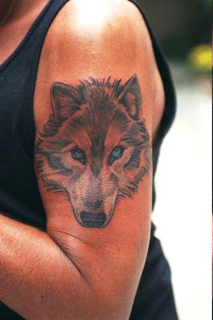 Encart chien loup
